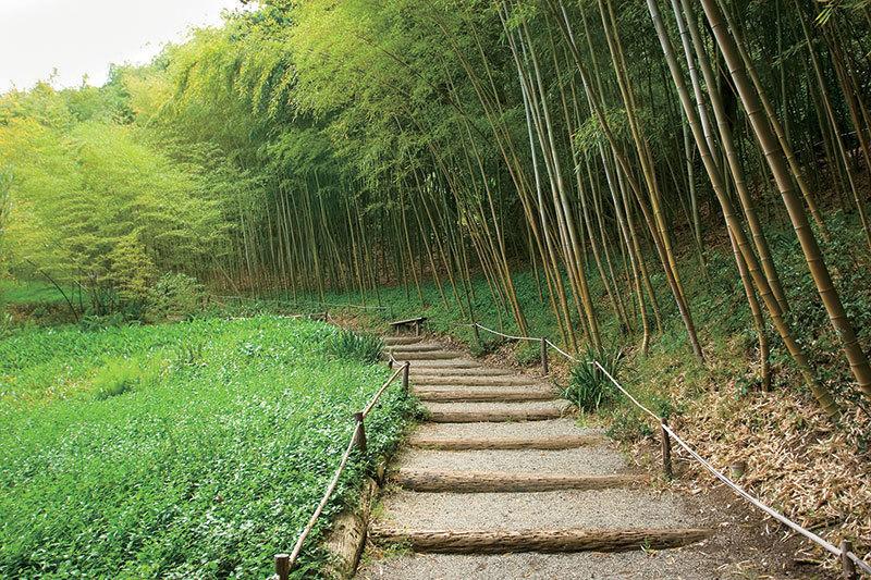 >竹林深處有茶鄉