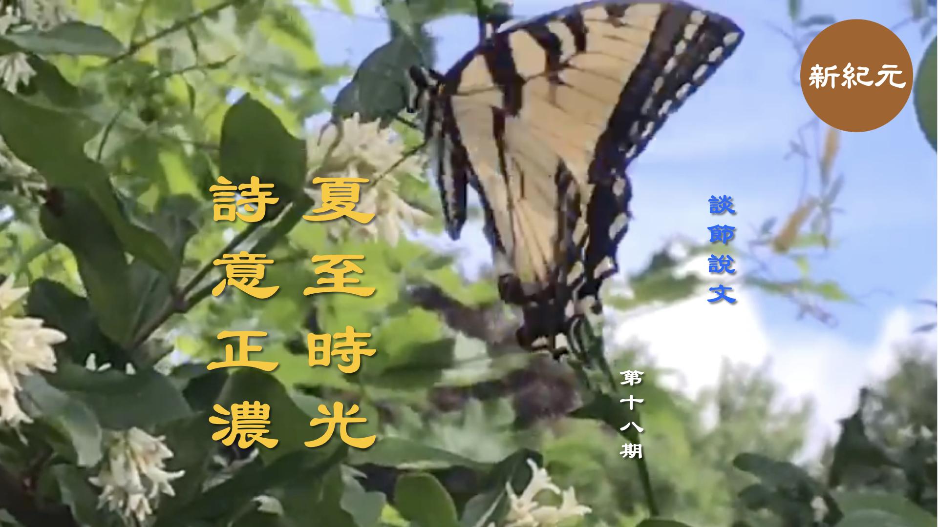 《談節說文》夏至時光 詩意正濃(第十八集)|#新紀元