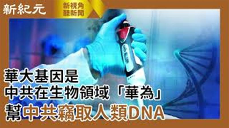 【新視角聽新聞 #519】華大基因是中共在生物領域「華為」 幫中共竊取人類DNA