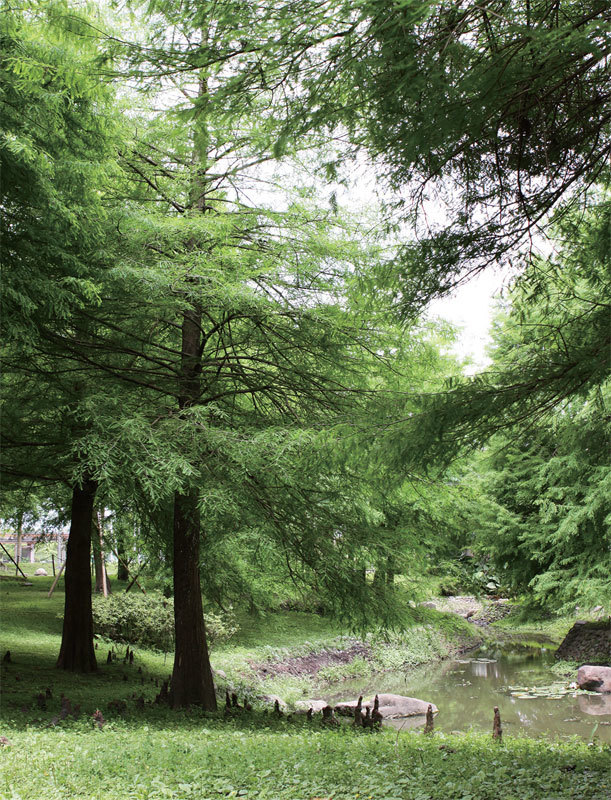 曦月相迎的森林休閒勝地