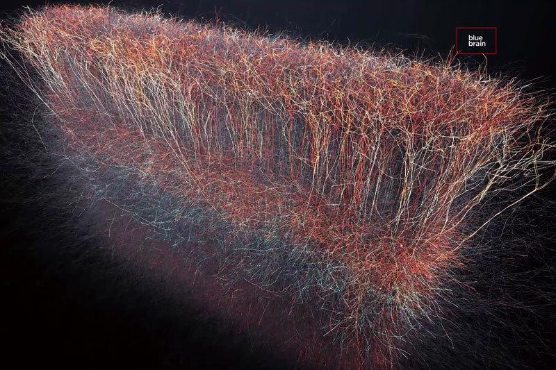 研究:人意識來自宇宙 腦細胞聯繫超過三維