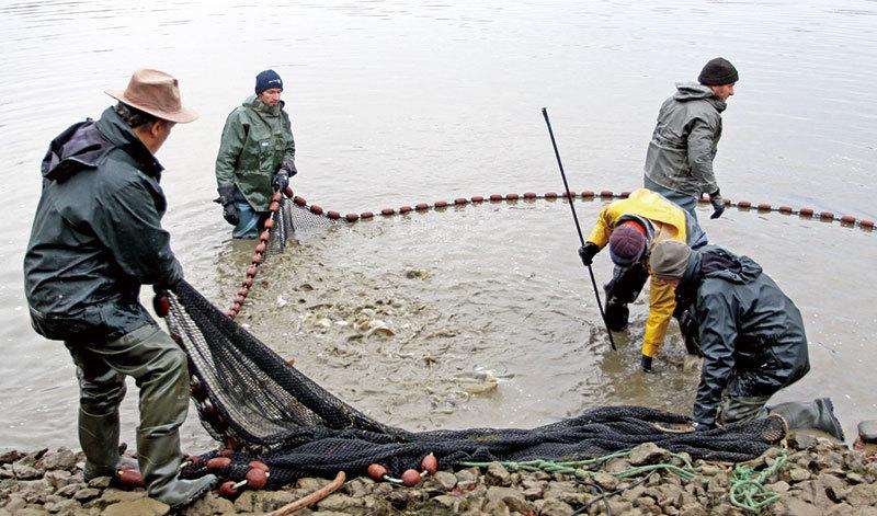 堅守百年捕魚傳統 法國漁民的冬收