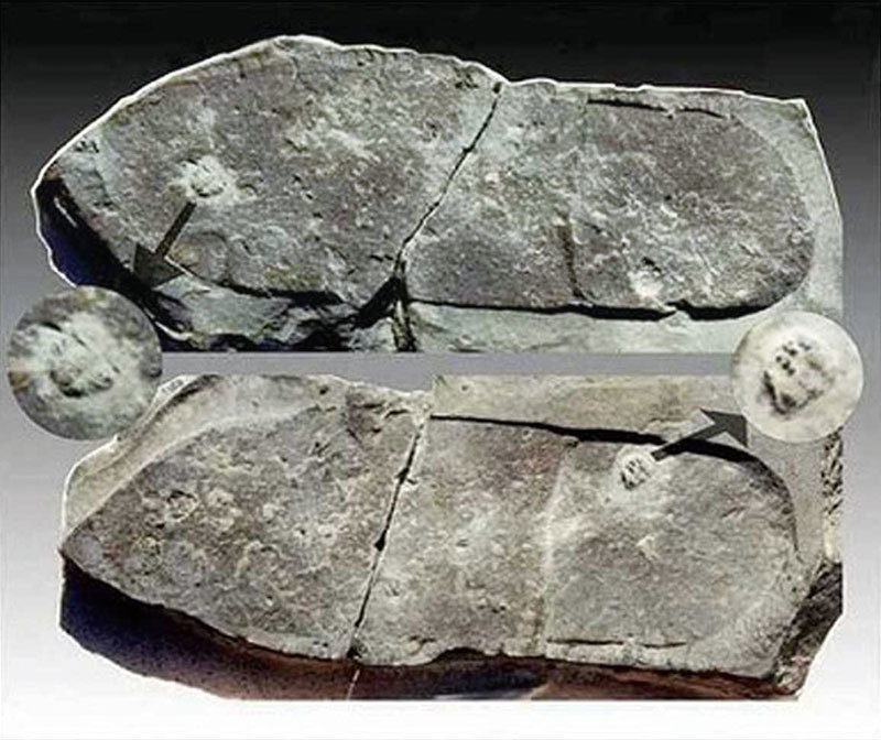>慧眼識寶 美少女發現三葉蟲化石