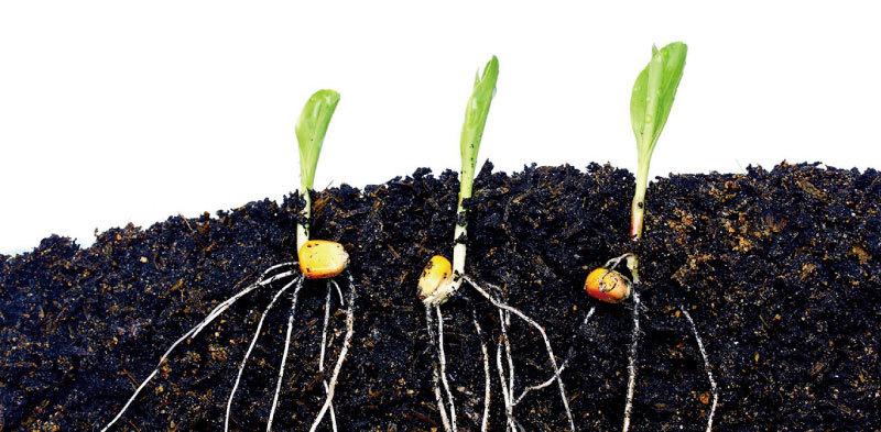 新研究:植物存在地下通訊系統