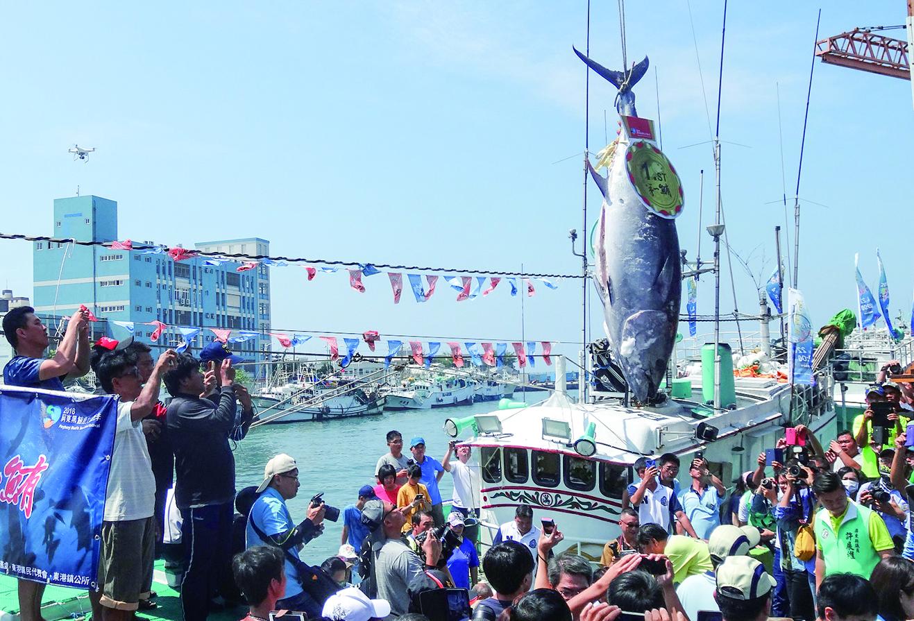>黑鮪魚觀光季 體驗漁村人文輕旅行