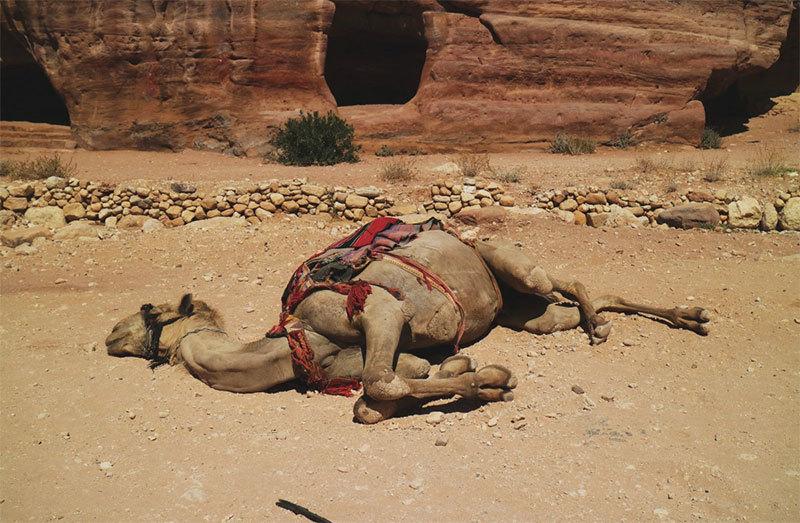 壓垮駱駝的稻草正一根根落下