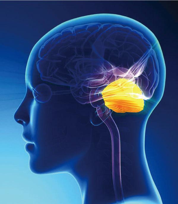 >神經科學家發現小腦新功能