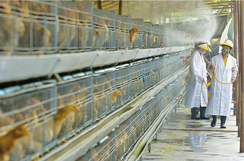>中國再爆禽流感疫情 已有人死亡
