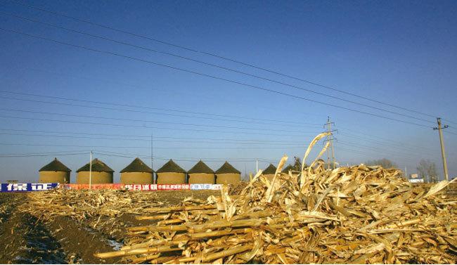 非洲豬瘟擋不住 貪夜蛾又蔓延 中國糧食告急 北京急查糧食庫存