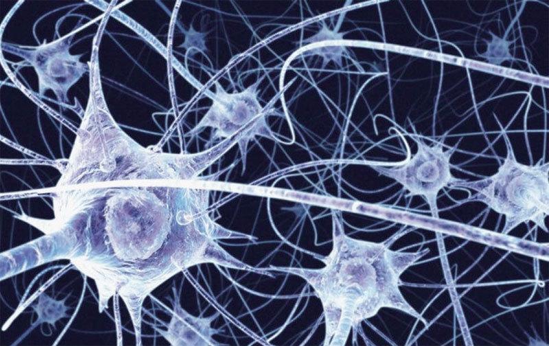 研究:人腦結構功能之層次可達11維